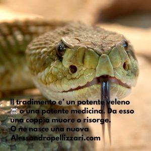 Il tradimento, veleno e panacea - foto Pixabay